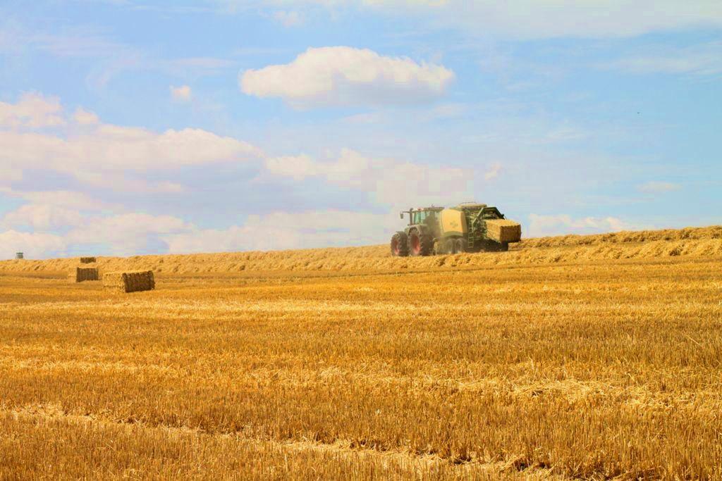 August – Getreideernte in Sachsen - IMG_1628a