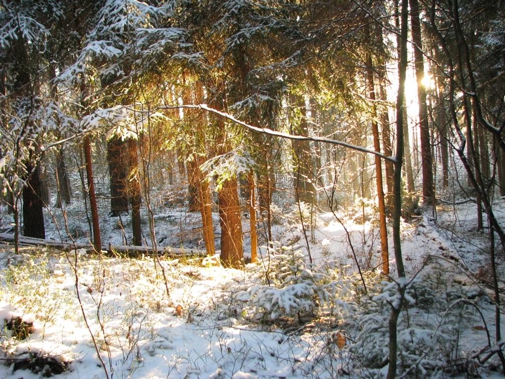 Dezember - Verschneit sind die Wälder.