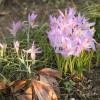 2012/03 – Und schon ist ein bisschen Frühling im Garten.