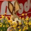 2012/03 – Noch 5 Tage, Ostern ist nicht mehr weit. (Beim Einkauf entdeckt.)