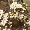 2012/04 – Blütenzauber zum Osterfest.