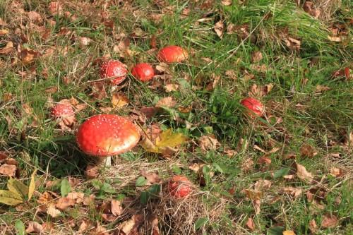 2012/10 – Herbstzeit