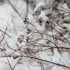 2013/02 – Winteransicht