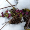2014/01 - In der 2. Hälfte des Januar ist Winter eingezogen.
