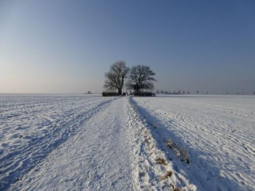 2014/01 - Ende Januar ist der Winter doch noch gekommen.