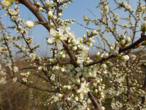 2013/03 - Der Frühling ist da!