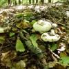 2014/09 - Es ist Zeit für Pilze.