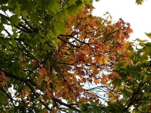 2014/10 – Es ist Herbstzeit.