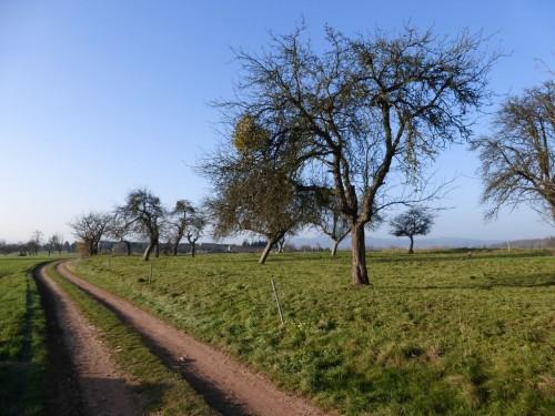 2014/11 – Wanderung bei milden Temperaturen und Sonnenschein.