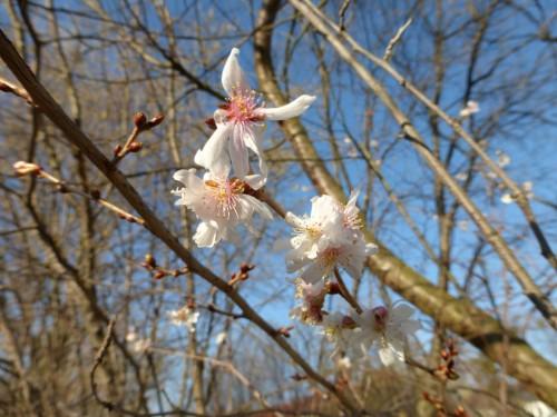 2015/01 – Blüten im Januar.