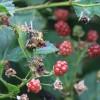 2015/08 – Die Früchte des Sommers sind reif.
