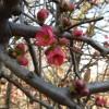 2016/03 – Blüten zur Osterzeit [1]