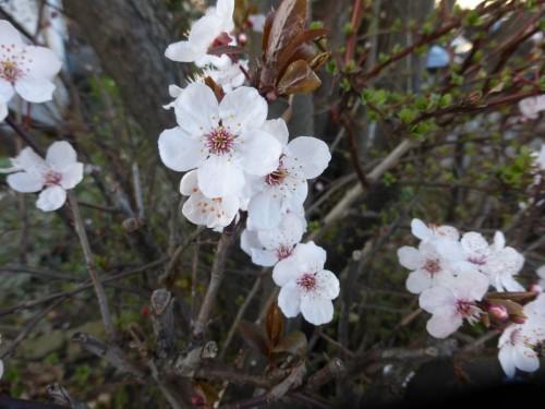 2016/03 – Blüten zur Osterzeit [2]