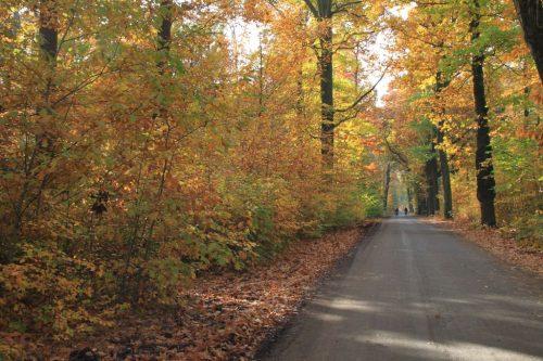 2016/10 - Auf durch den Herbstwald.