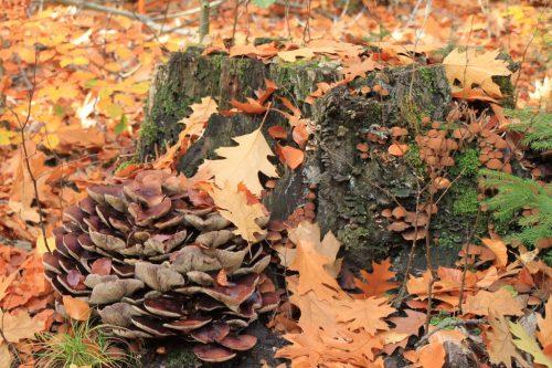 2016/10 – Pilze über Pilze.