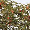 2016/10 – Für den kleinen Hunger sind noch Äpfel da.