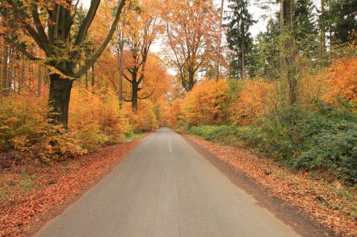 2016/10 - Herbstwald