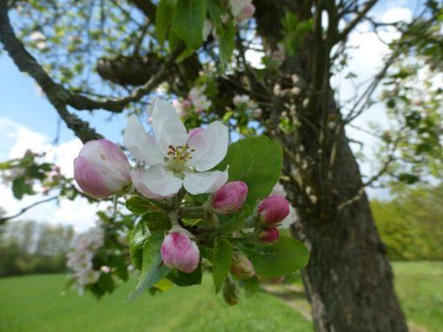 2017/05 - Bei einer Wanderung um Hirschbach gesehen.