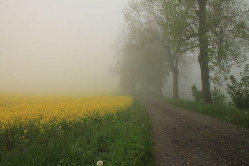 2017/06 - Erzgebirgstag mit einem Start im Nebel.