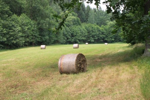 2017/07 - Kurze Wanderung zum Bergmännel bei Eppendorf.