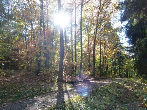2017/10 - Herbstwanderung durch die Dresdner Heide.
