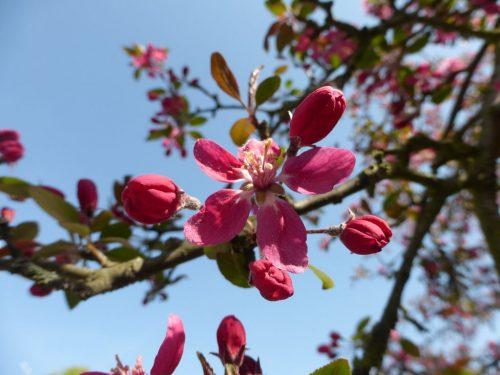 2018/04 - Hurra, der Frühling ist da!