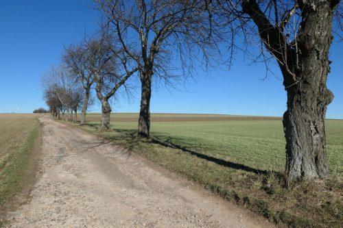2019/02 - Alte Obstbäume säumen den Weg.