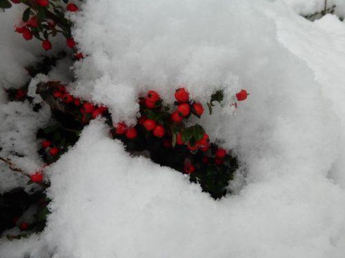 2019/02 - Gut geschützt vom Schnee wartet die Natur.
