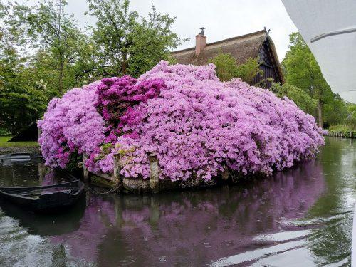 2019/05 - Welch eine Blütenpracht im Spreewald.