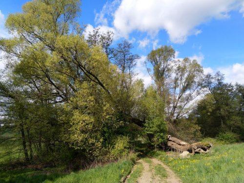 2020/05 - Wanderung am Keulenberg. [2]