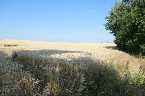 2020/07 - Es ist schon Zeit für die Ernte.