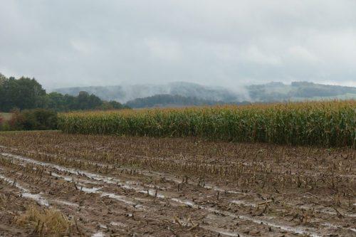 2020/10 - Im Regen steigen die Nebel auf.