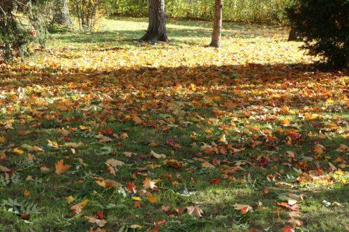 2020/10 - Herbstzeit