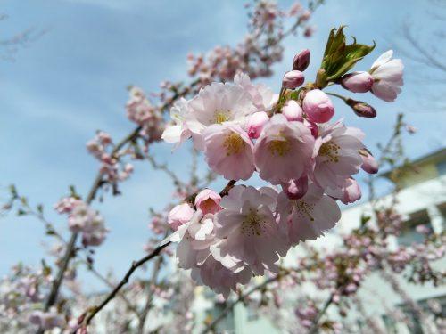 2021/04 Blütenpracht im April.